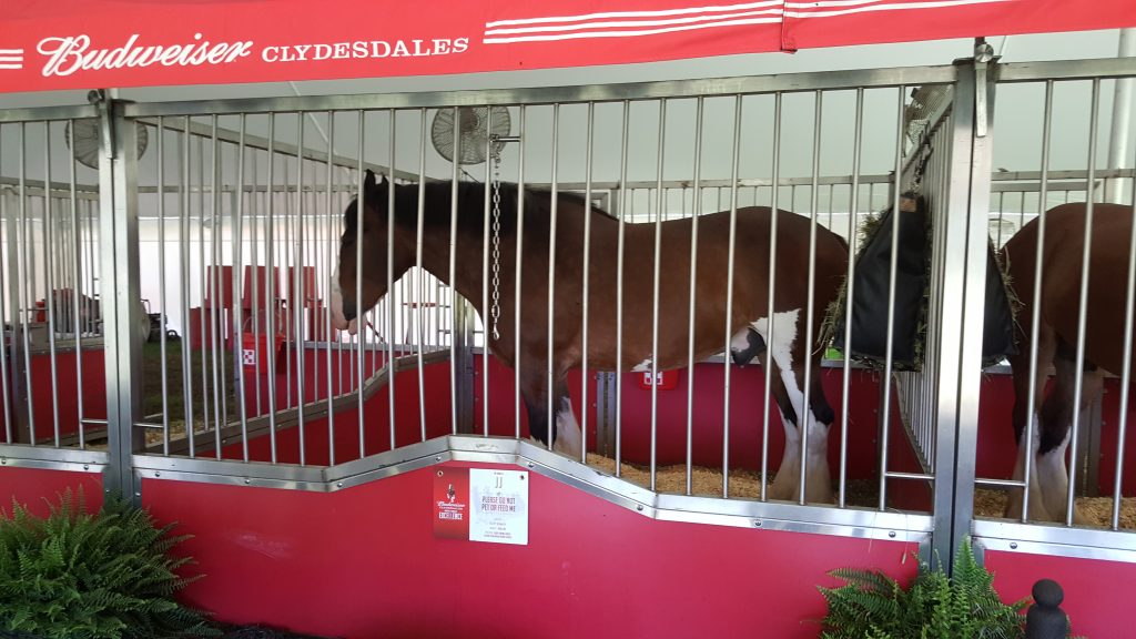 Budweiser Clydesdales Stable 1