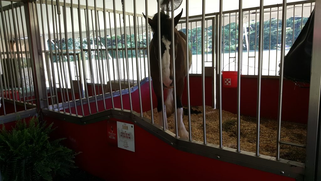 Budweiser Clydesdales Stable 2