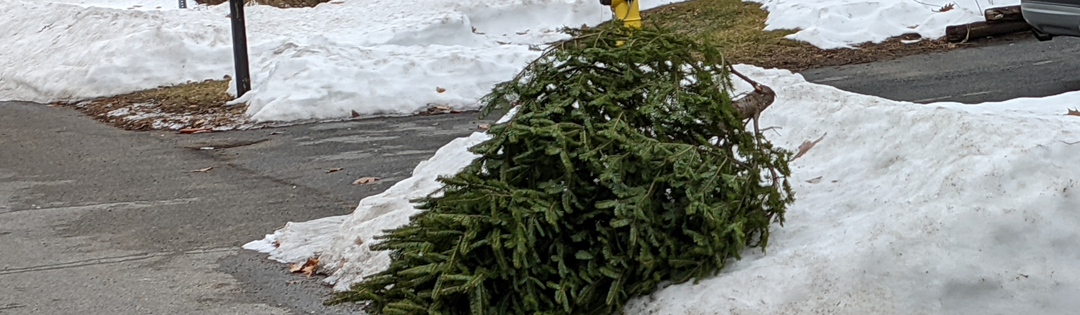 How to Dispose of your Real Christmas Tree in the Saratoga Springs Area