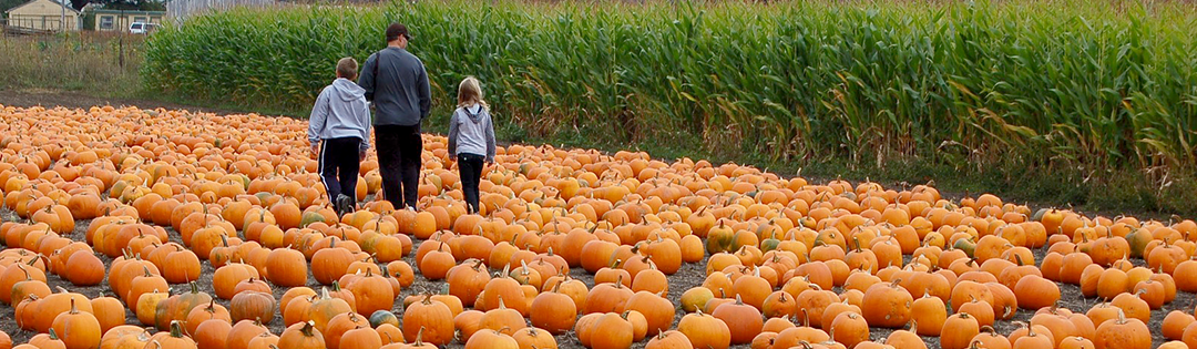 How to Pick Pumpkins and Find a Pumpkin Patch in Saratoga Springs NY